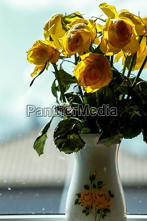 gelbe rosen in vase am fenster