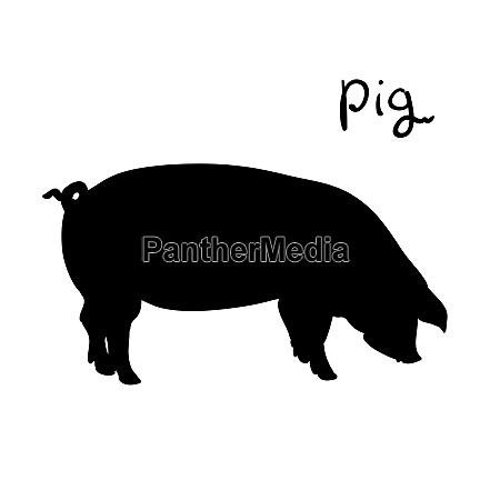 pig of vector illustration silhouette farming