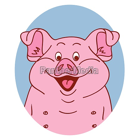 pig face pig isolated pig portrait