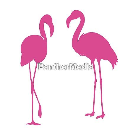 flamingo exotische vogel zwei rosa flamingo