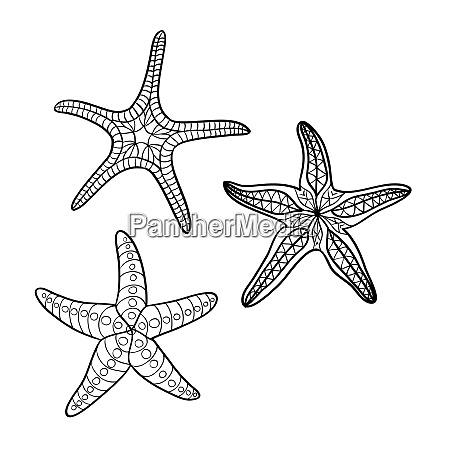 hand drawn starfish in black