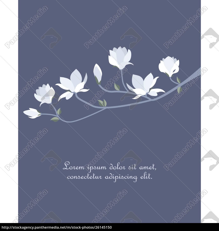 vector, magnolia, blumen - 26145150