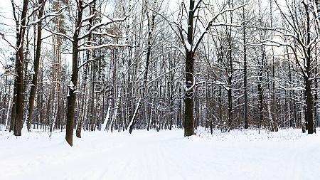 schneebedeckter fussweg im stadtpark im winter