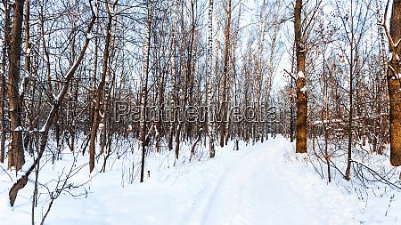 winter wald landschaft panorama ansicht saison