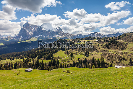 alpine meadows on the alpe di
