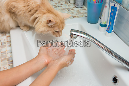 domestic cat trying to drink water