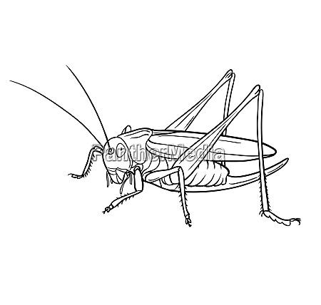 grasshopper graphic version illustration