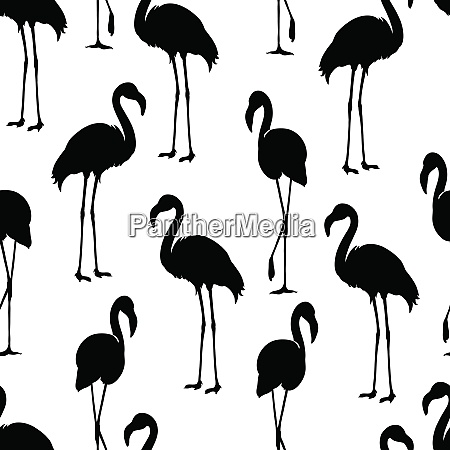 flamingo isolated exotic bird flamingo silhouette