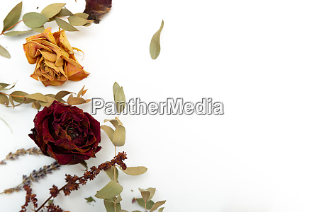 dried herbs and flowers rose lavender