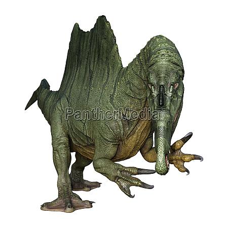 3d rendering dinosaur spinosaurus on white