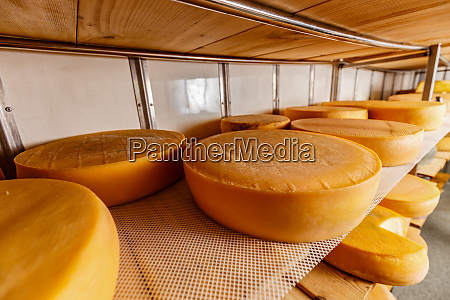 rows of cheese pieces