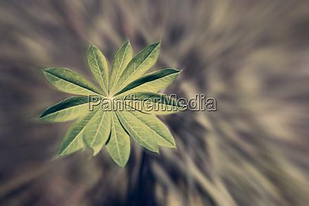 detail einer frischen lebendigen pflanze mit
