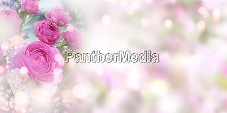 zarte rosa rosen hintergrund