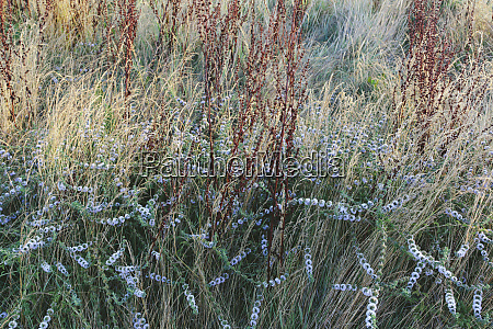 detail of wildflower meadow and grasses