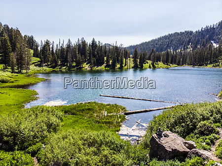 tranquil lake with lush foliage and