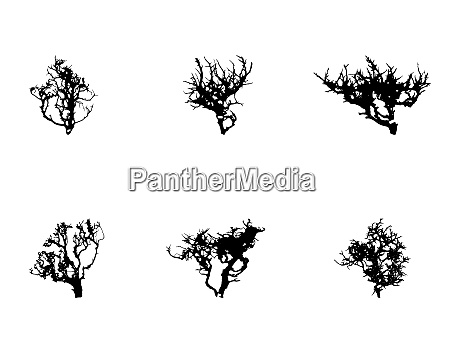 set of tree silhouette isolated on