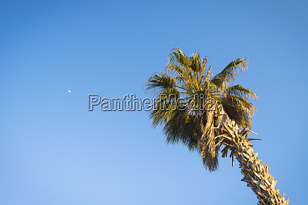 view of single palm tree against