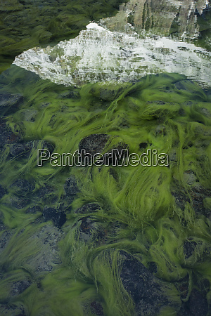 view of green algae in lake