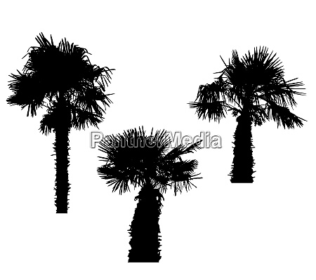isolated silhouette of palm trees on
