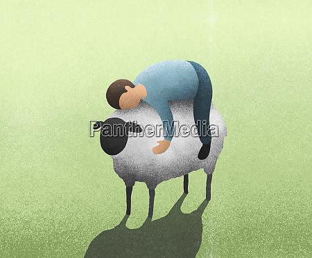 mann legt sich auf lamm
