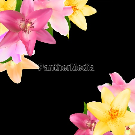 vector illustration with lily flowers isolated