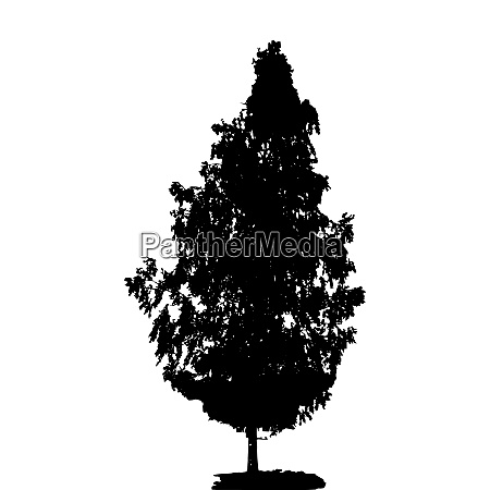 black and white silhouette of deciduous