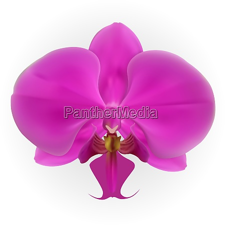 colorful naturalistic orchid isolated on white