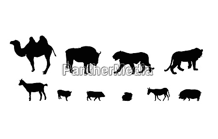 silhouette of wild and domestic animals