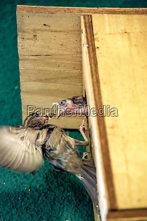 sparrow feeding young bird