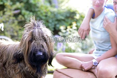 porträt, des, hundes, mit, haarclip, im - 26354450
