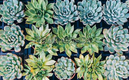 china hong kong succulents at the