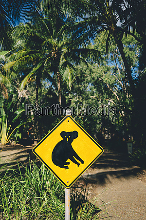 australia magnetic island koala animal crossing