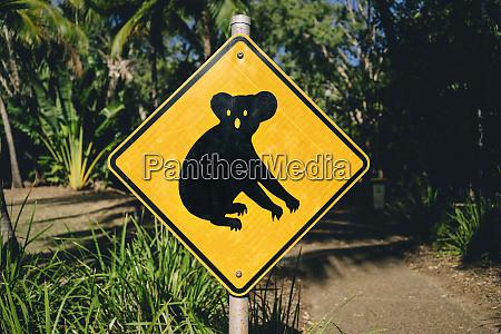 australia magnetic island koala animal crossing