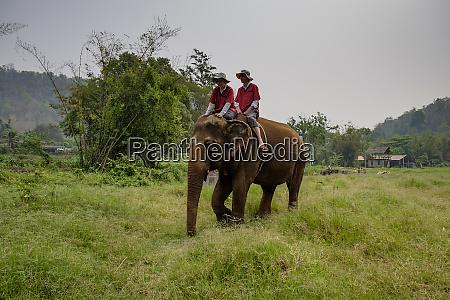 thailand provinz chiang mai ran tong