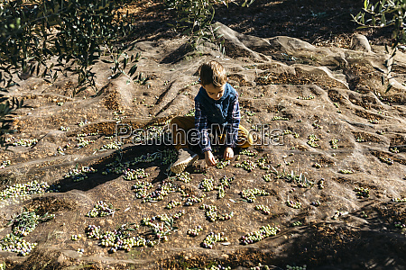 boy playing with olives in olive