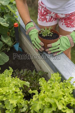 close up of woman gardening at