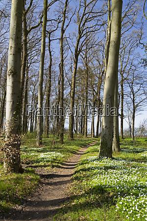 germany mecklenburg western pomerania warnemuende forest