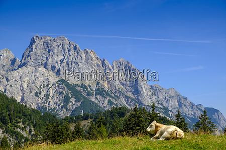 austria salzburg state pinzgau grosses muehlsturzhorn