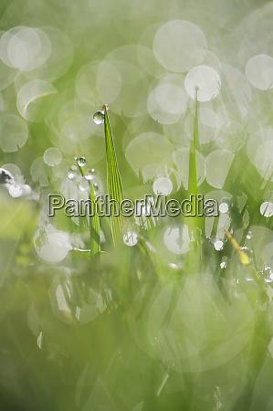 dew on grass selective focus close
