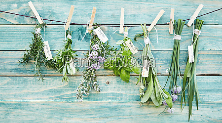 bunches of assorted fresh green culinary