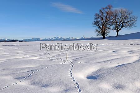 schoene schneelandschaft mit tierspuren im winter