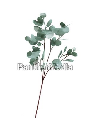 aquarell modernes dekoratives element set eukalyptus