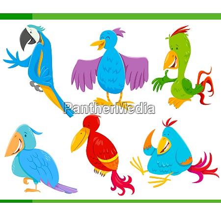 colorful birds cartoon characters set