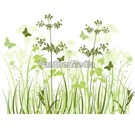 gruener vektorhintergrund mit wildblumen und schmetterlingen
