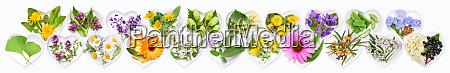 die wichtigsten heilpflanzen