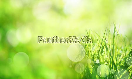 sonnig gruener fruehlingshintergrund