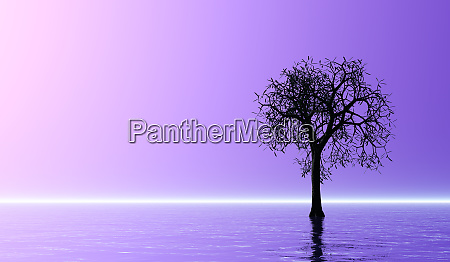 tree silhouette on water