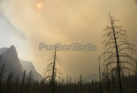 forest fire glacier national park montana