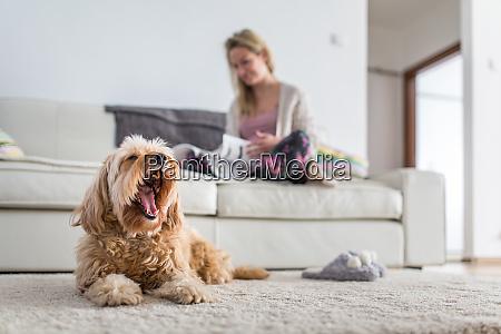 hund in einem modernen hellen wohnzimmer