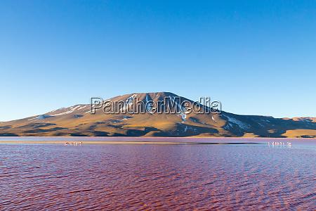 bolivien laguna colorada potosi rote lagune